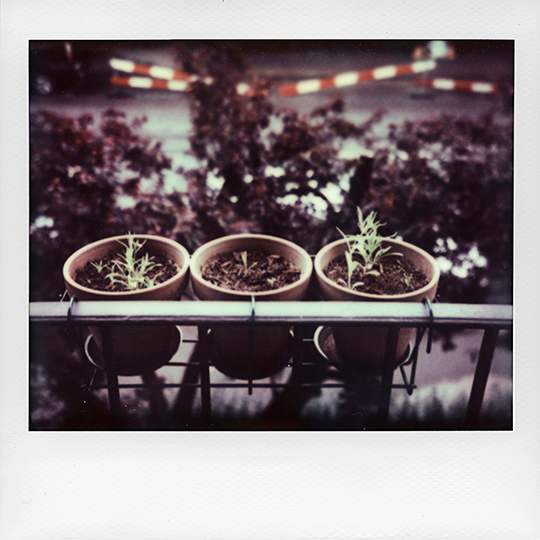Growing plants in pots on the balcony, polaroid image spectra